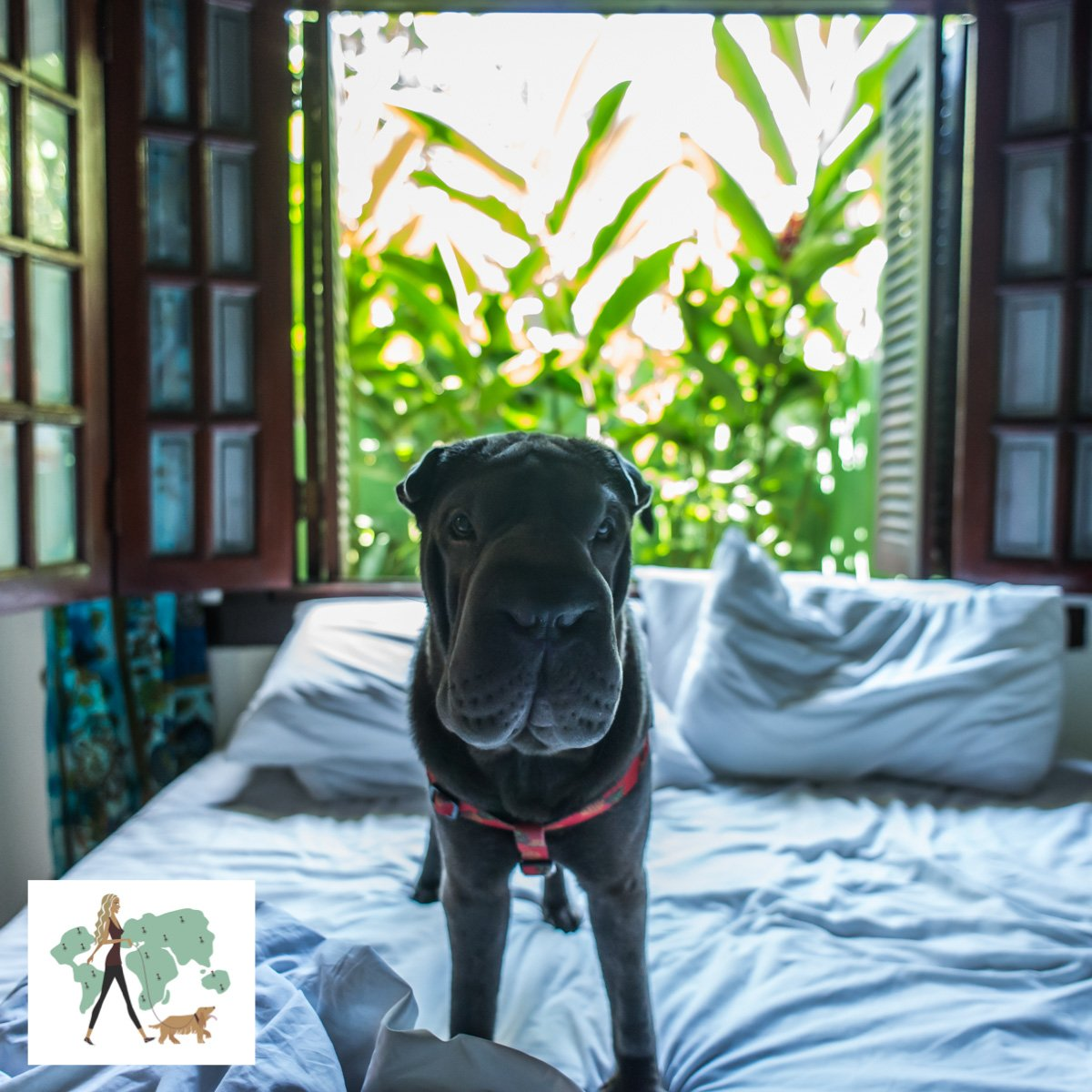 Pousada Pura Vida: ama receber pets - Pet Booking Blog